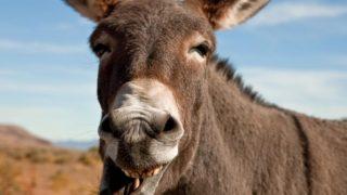 pesquisa-polemica-divulgada-na-internet-teria-dito-que-brasileiro-e-o-3-povo-mais-burro-do-mundo_1475677